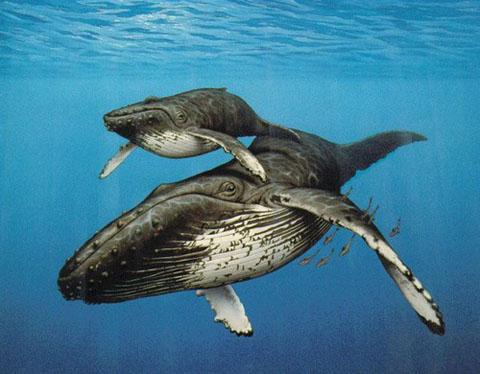 Интересные факты о китах