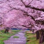 Япония интересные факты и традиции
